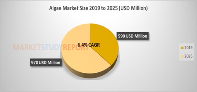 At 6.4% CAGR, Algae Market Size, Growth Forecast to Register US$ 970 million by 2025